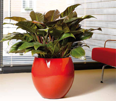 Synthetic Planter