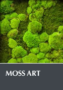 Moss Art 2014