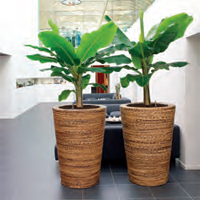 First Choice Planter
